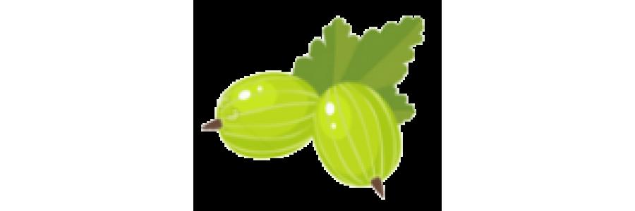 агрус
